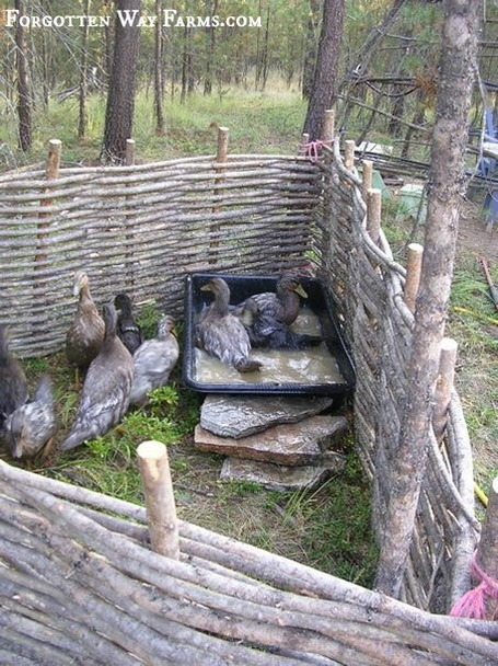 How To Make Wattle Fencing Step By Step For Animal And