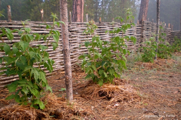 When I first thought about making Wattle hurdles, I had three main questions: How strong could a bunch of sticks really be? Aren't these hurdles going to be insanely heavy? And lastly, how long were they going to last?