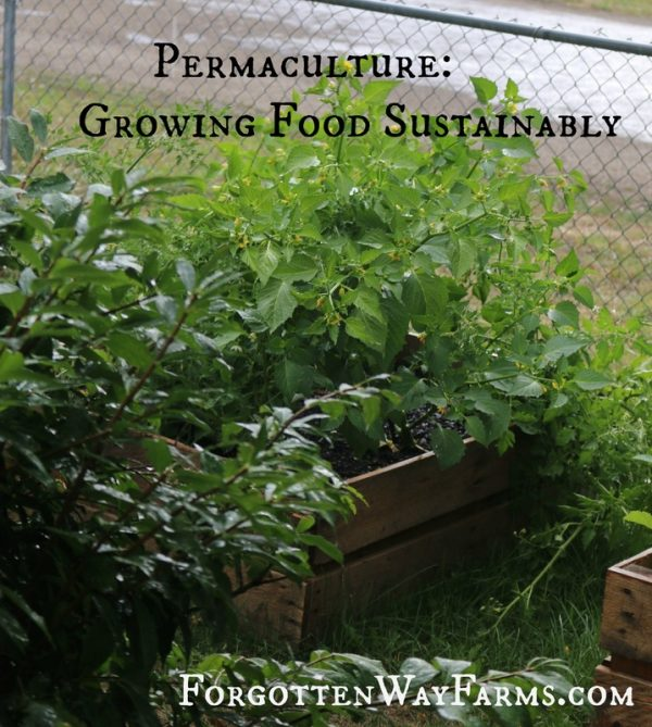 Permaculture & Geoff Lawton
