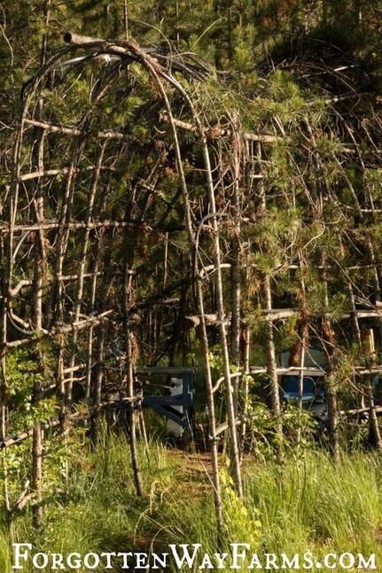 This is amazing, what a great idea. A living gazebo made of living trees! DIY Outdoor Bathing Area at Forgotten Way Farms Blog!