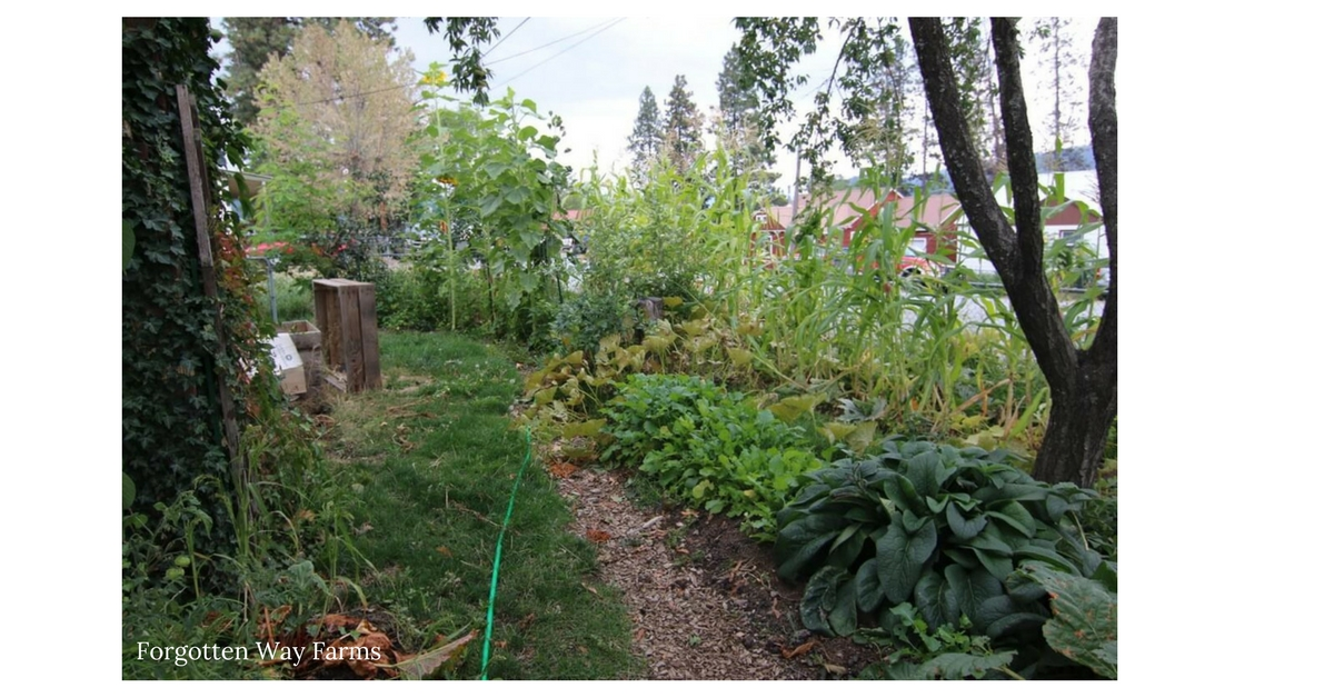 Homesteads of the Past & Present. What an inspiration for me living in town with nothing but an ugly, empty yard!Turn it into a permaculture jungle!