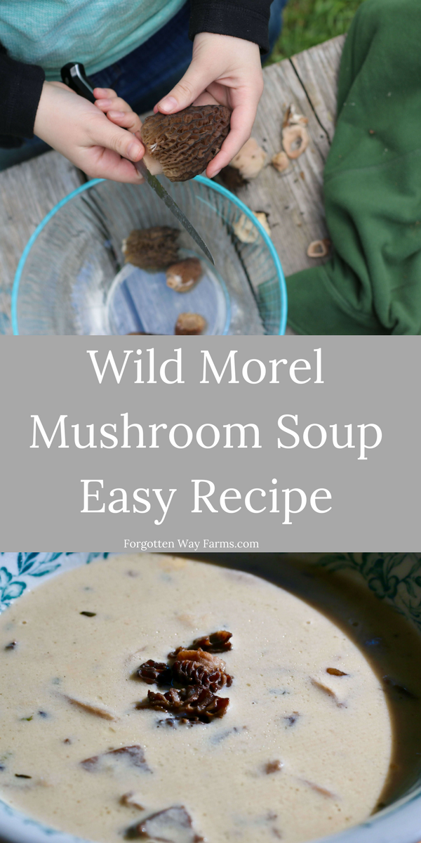 Wild Morel Mushroom Soup, an easy and delicious recipe from Forgotten Way Farms!