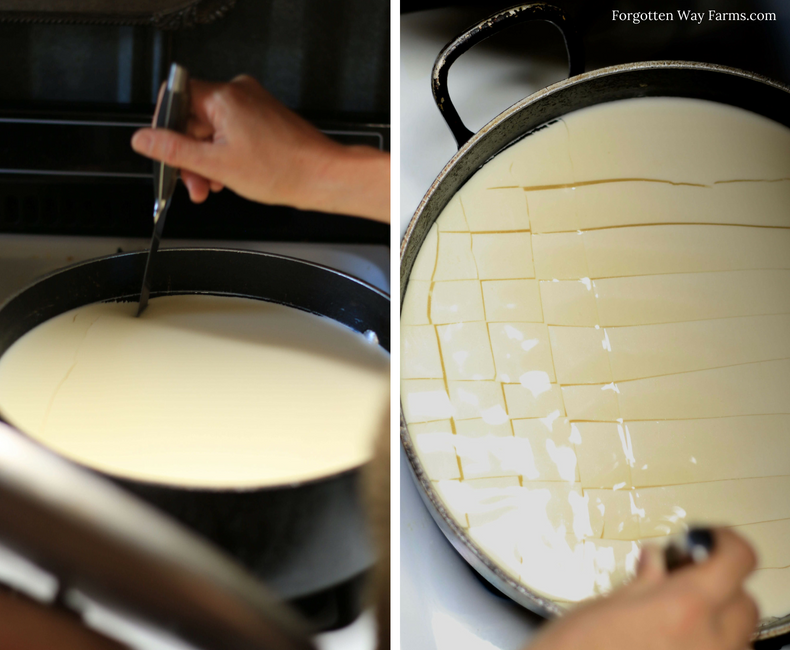~Step 5. Cutting the Curds~Photo Tutorial for making Homemade Feta Cheese at Forgotten Way Farms