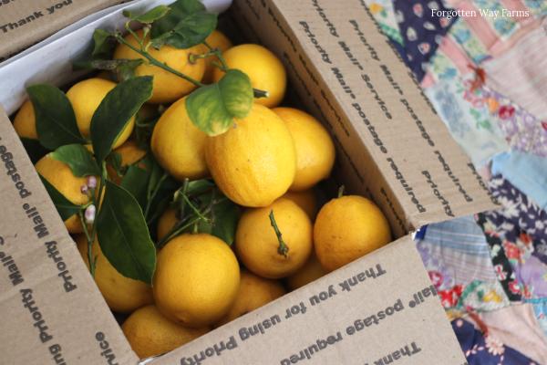 Fresh Lemons from California for Homemade Lemon Curd