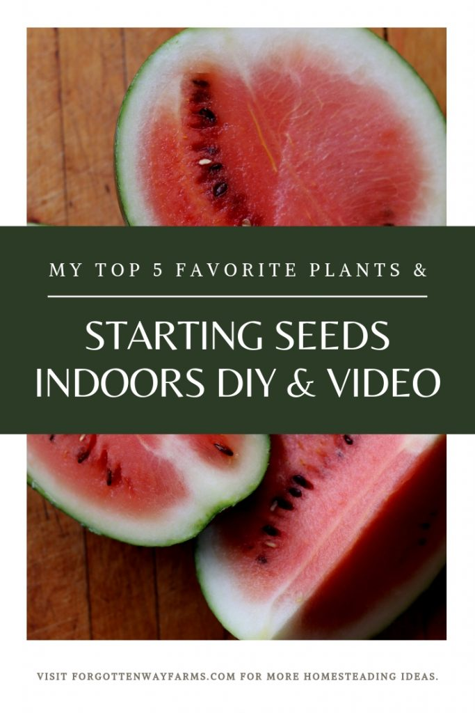 Starting Seeds Indoors | Top 5 Plants I'll show you my favorite way to start seeds indoors and my top 5 favorite plants for cold climates! #startingseedsindoors #gardeningdiy #DIY