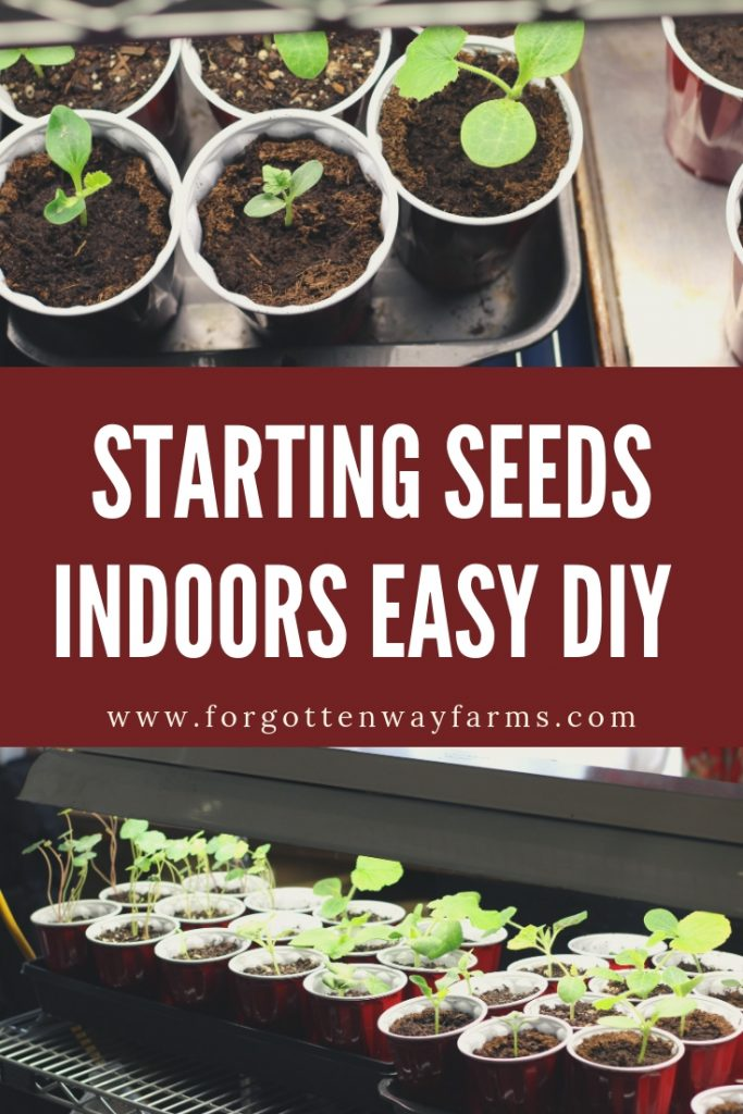 Starting seeds indoors is an affordable and easy option that allows you to grow and raise many heirloom varieties that can be difficult and expensive to find at nurseries. I'm in love with heirloom seeds, the texture, color, flavor, and varieties are awe-inspiring.  #startingseedsindoors #diy #organicseeds