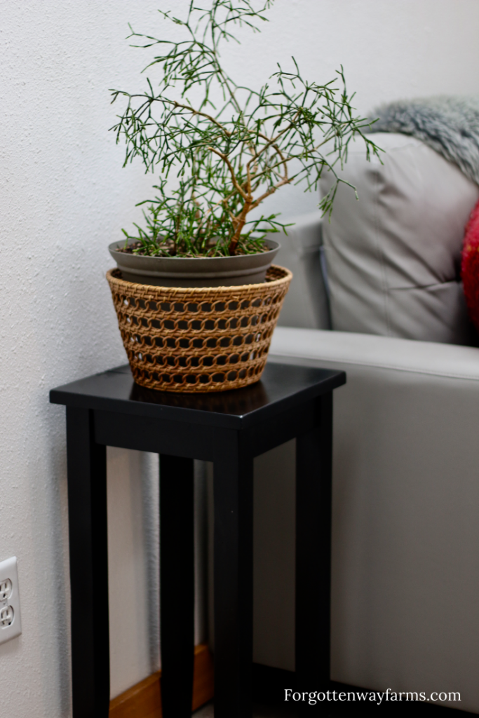 A plant in a basket, on a black side table.