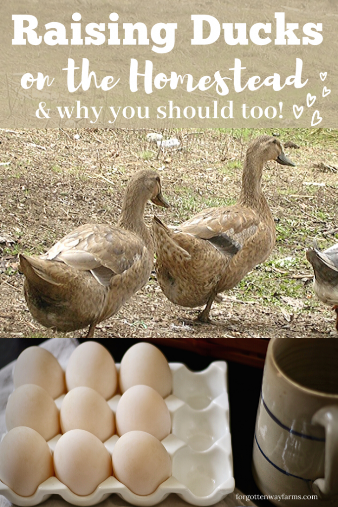 "A banner that says ""Raising Ducks on the Homestead & why you should too!"" Below that a pair of ducks walking, and under that a container of duck eggs."