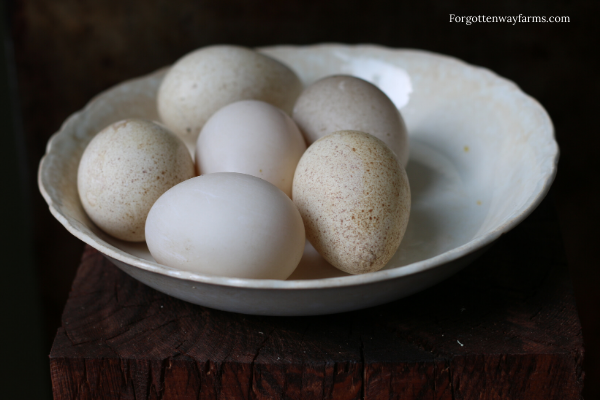 A bowl with duck eggs